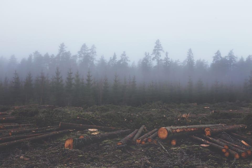 foresta-p